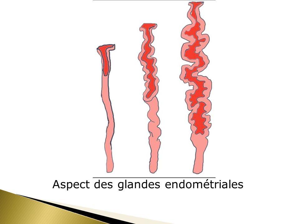 Aspect des glandes endométriales