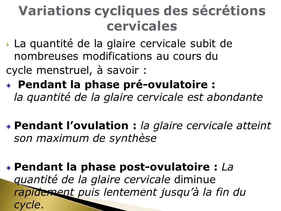 La quantité de la glaire cervicale subit de nombreuses modifications au cours du cycle menstruel, à savoir : Pendant la phase pré-ovulatoire : la quantité de la glaire cervicale est abondante Pendant lovulation : la glaire cervicale atteint son maximum de synthèse Pendant la phase post-ovulatoire : La quantité de la glaire cervicale diminue rapidement puis lentement jusquà la fin du cycle.