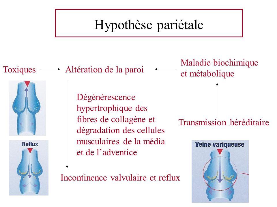 Hypothèse pariétale Altération de la paroi Incontinence valvulaire et reflux Dégénérescence hypertrophique des fibres de collagène et dégradation des