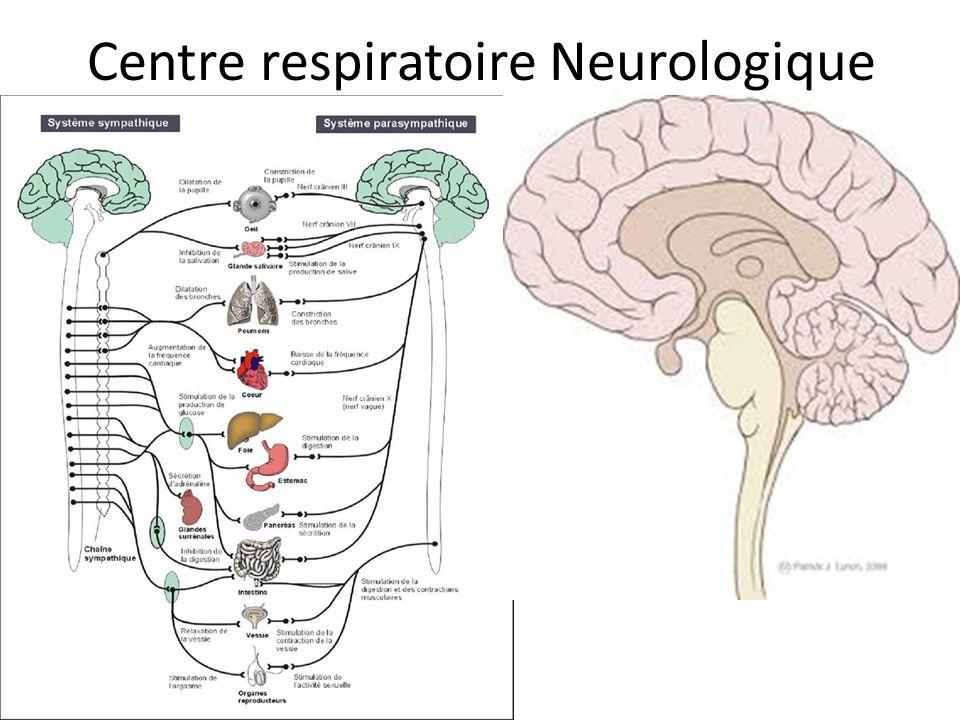 Centre respiratoire Neurologique