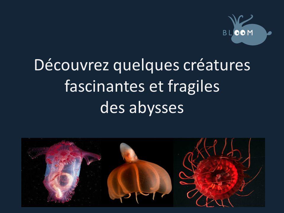 Les abysses Les océans occupent 99% de lespace habitable de la Terre.