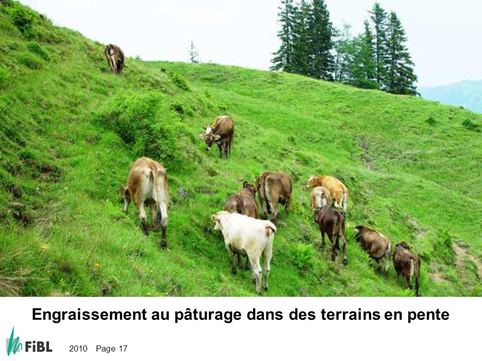 2010 Page 17 Bild: Weidemast im steilen Gelände Engraissement au pâturage dans des terrains en pente