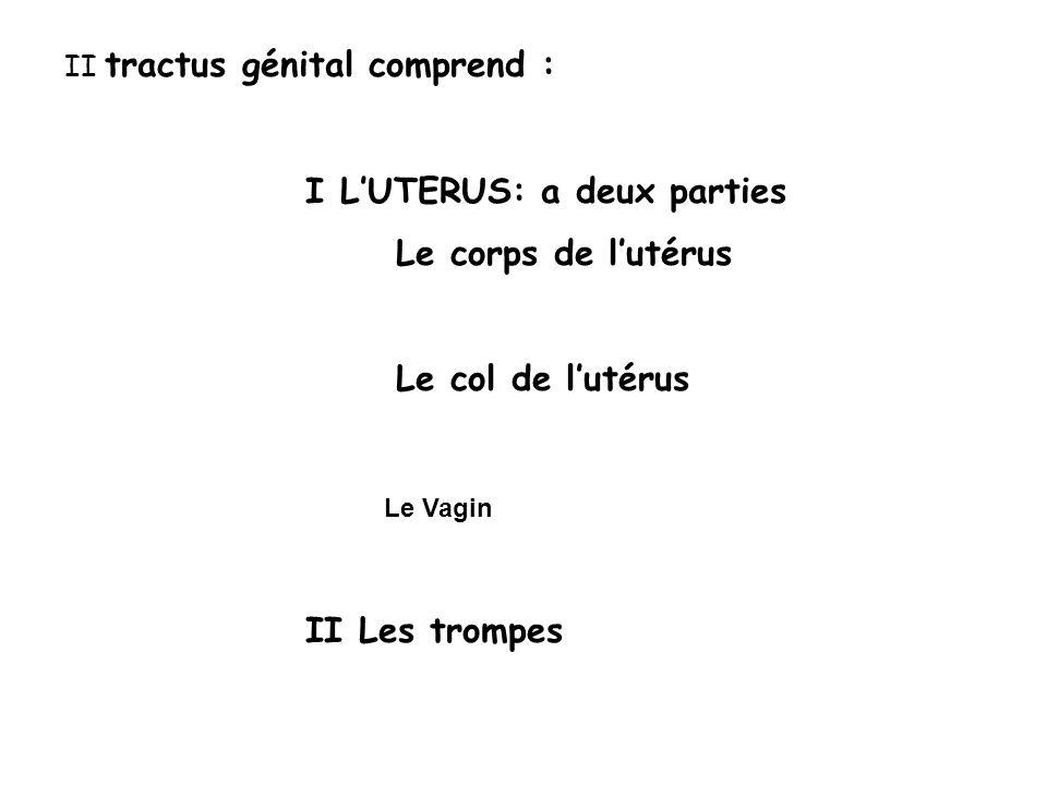 II tractus génital comprend : I LUTERUS: a deux parties Le corps de lutérus Le col de lutérus Le Vagin II Les trompes