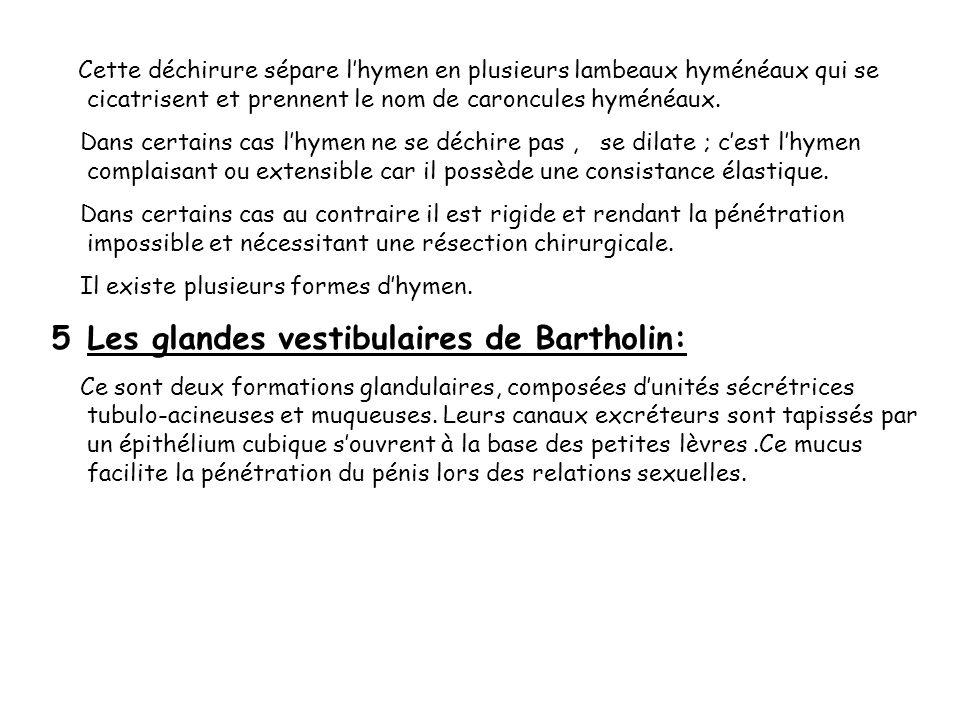 Cette déchirure sépare lhymen en plusieurs lambeaux hyménéaux qui se cicatrisent et prennent le nom de caroncules hyménéaux. Dans certains cas lhymen