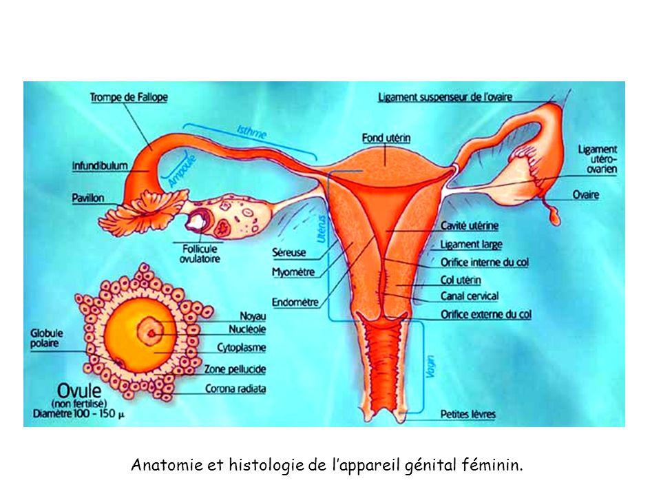 Anatomie et histologie de lappareil génital féminin.