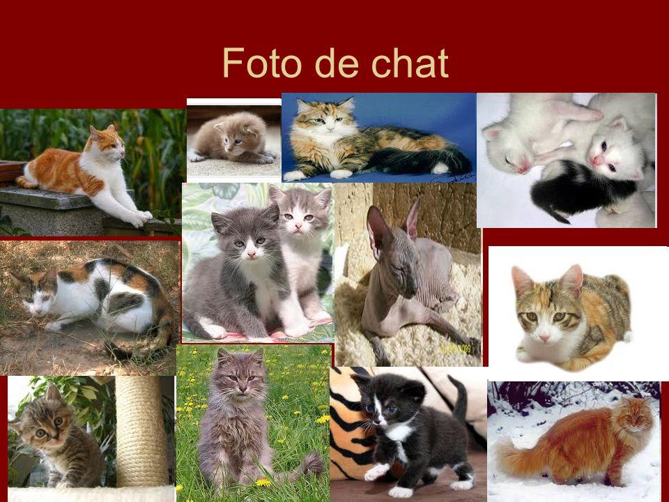Foto de chat