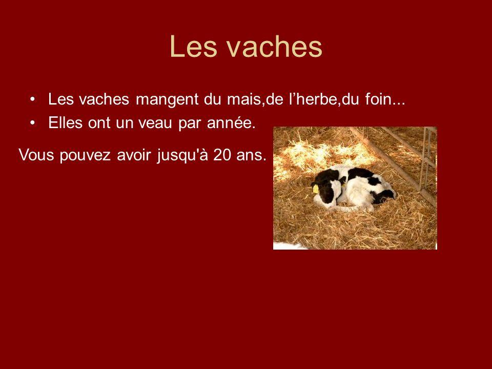 Les vaches Les vaches mangent du mais,de lherbe,du foin... Elles ont un veau par année. Vous pouvez avoir jusqu'à 20 ans.