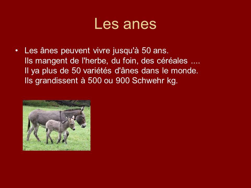 Les anes Les ânes peuvent vivre jusqu'à 50 ans. Ils mangent de l'herbe, du foin, des céréales.... Il ya plus de 50 variétés d'ânes dans le monde. Ils