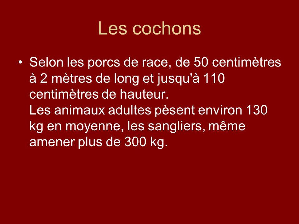 Les cochons Selon les porcs de race, de 50 centimètres à 2 mètres de long et jusqu'à 110 centimètres de hauteur. Les animaux adultes pèsent environ 13