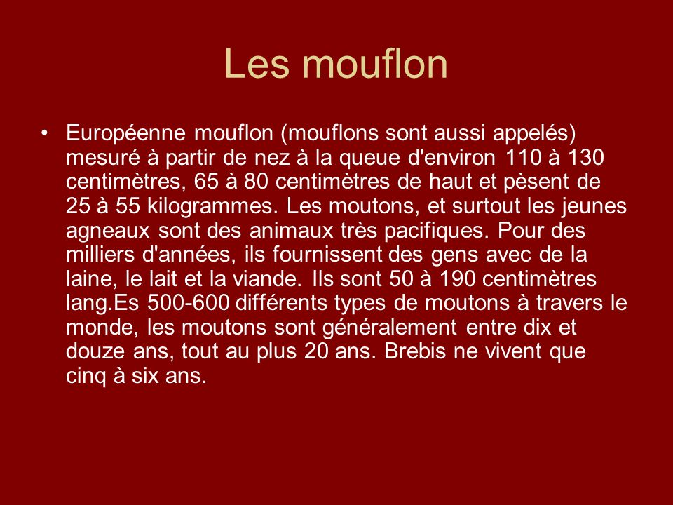 Les mouflon Européenne mouflon (mouflons sont aussi appelés) mesuré à partir de nez à la queue d'environ 110 à 130 centimètres, 65 à 80 centimètres de