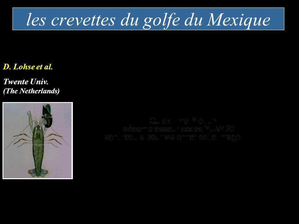 les crevettes du golfe du Mexique D. Lohse et al. Twente Univ. (The Netherlands)