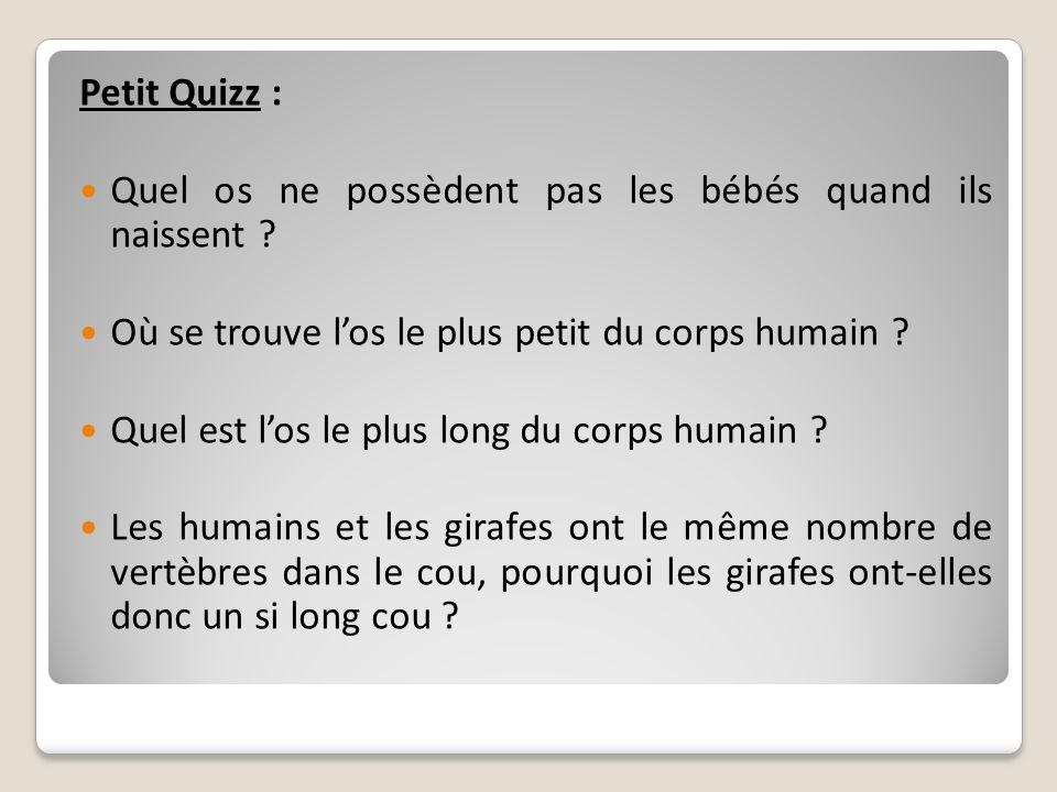 Petit Quizz : Quel os ne possèdent pas les bébés quand ils naissent ? Où se trouve los le plus petit du corps humain ? Quel est los le plus long du co