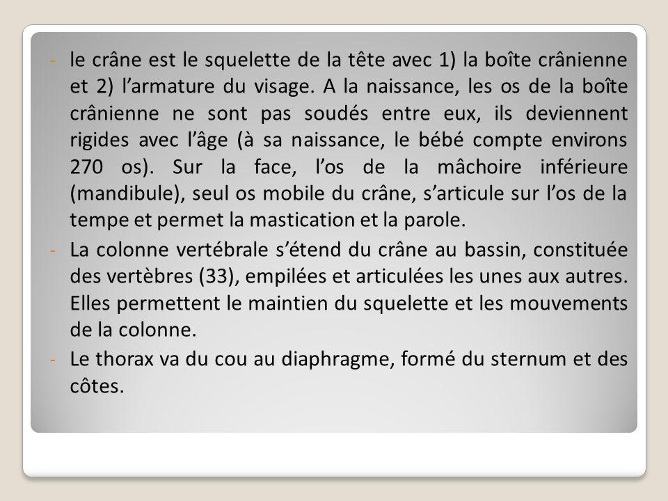 - le crâne est le squelette de la tête avec 1) la boîte crânienne et 2) larmature du visage. A la naissance, les os de la boîte crânienne ne sont pas