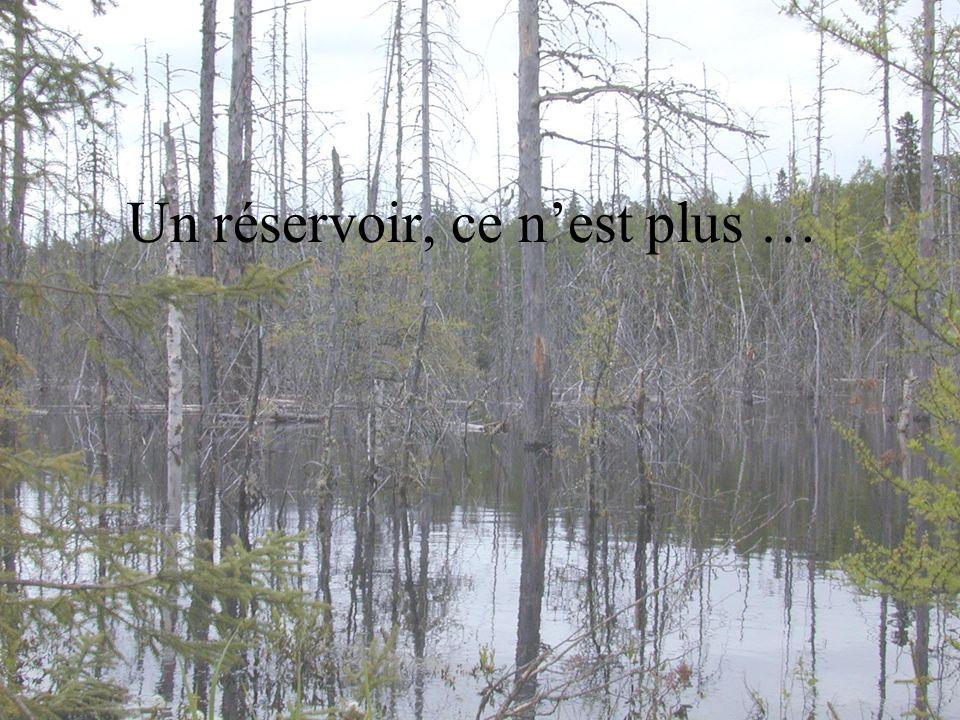 Les poissons des réservoirs contiennent jusquà dix fois plus de mercure, à espèces similaires et à tailles égales, que des poissons de lacs naturels voisins.