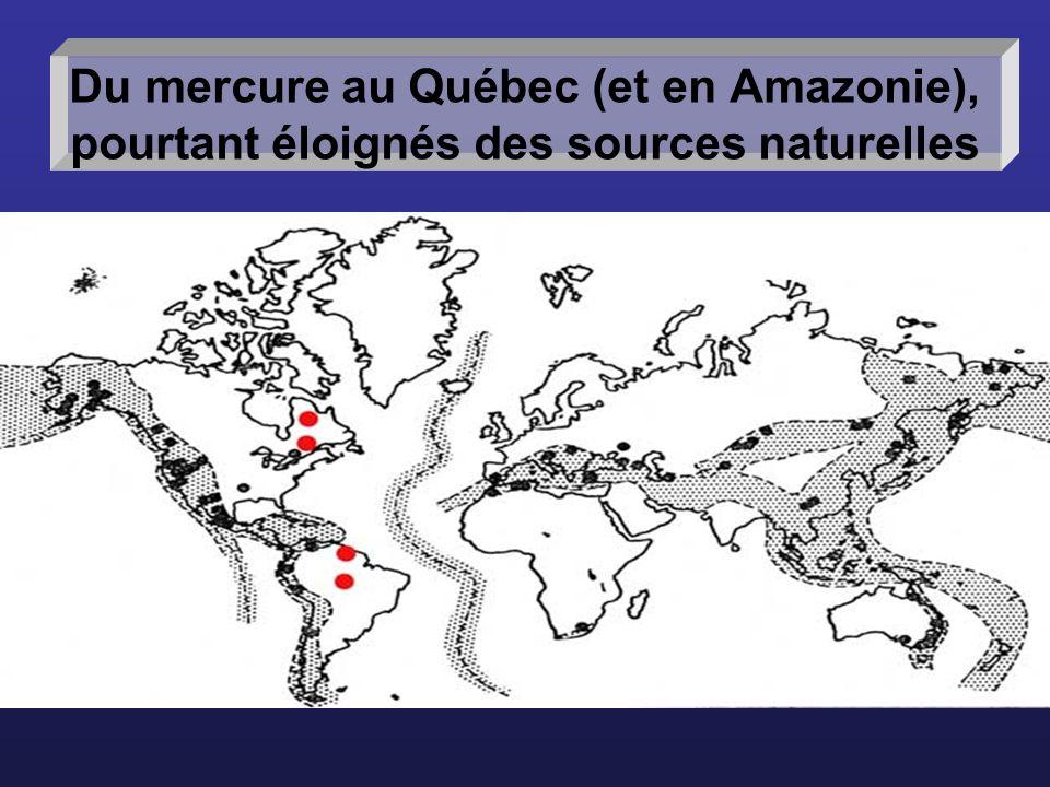 Les sols inondés au fond dun réservoir représentent dimportantes sources potentielles de Hg pour les organismes aquatiques