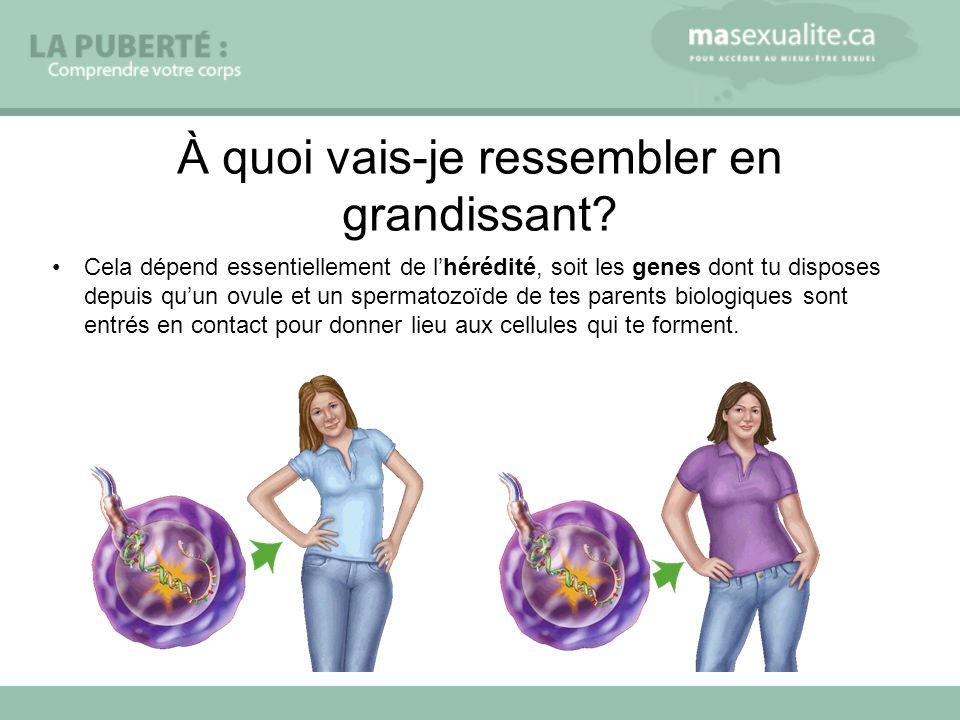 Cela dépend essentiellement de lhérédité, soit les genes dont tu disposes depuis quun ovule et un spermatozoïde de tes parents biologiques sont entrés
