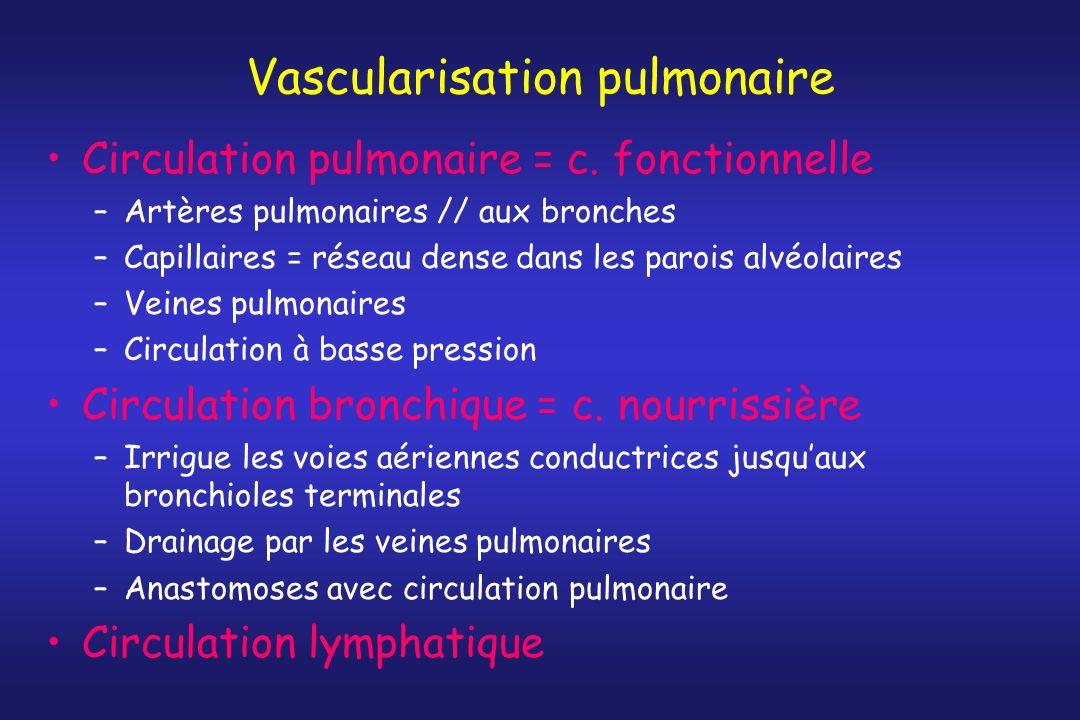 Vascularisation pulmonaire Circulation pulmonaire = c. fonctionnelle –Artères pulmonaires // aux bronches –Capillaires = réseau dense dans les parois