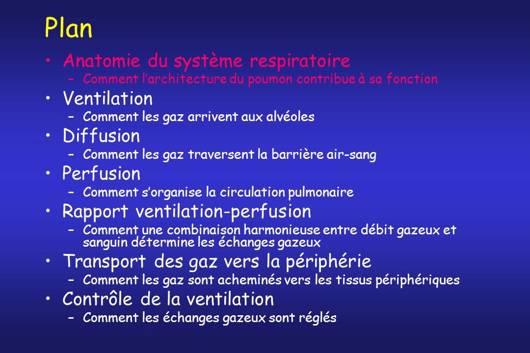 Vascularisation pulmonaire Circulation pulmonaire = c.