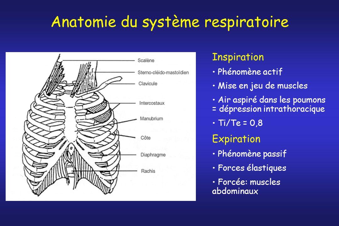 Ventilation alvéolaire et espace mort anatomique
