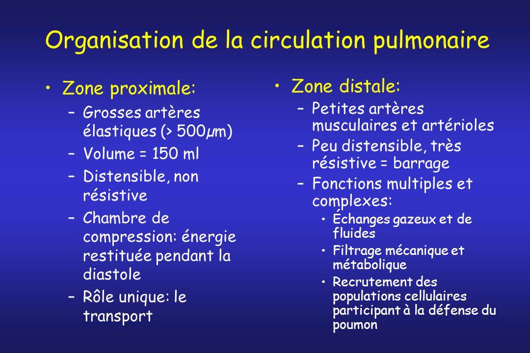 Organisation de la circulation pulmonaire Zone proximale: –Grosses artères élastiques (> 500µm) –Volume = 150 ml –Distensible, non résistive –Chambre