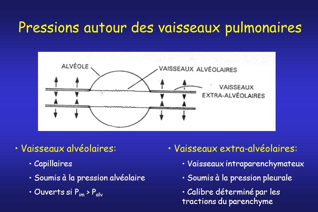 Pressions autour des vaisseaux pulmonaires Vaisseaux alvéolaires: Capillaires Soumis à la pression alvéolaire Ouverts si P im > P alv Vaisseaux extra-