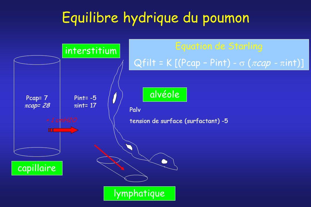 Equilibre hydrique du poumon capillaire alvéole interstitium Pcap= 7 cap= 28 Pint= -5 int= 17 Palv tension de surface (surfactant) -5 lymphatique Equa