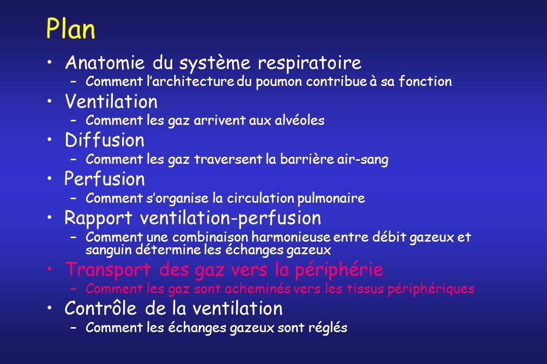 Plan Anatomie du système respiratoire –Comment larchitecture du poumon contribue à sa fonction Ventilation –Comment les gaz arrivent aux alvéoles Diff
