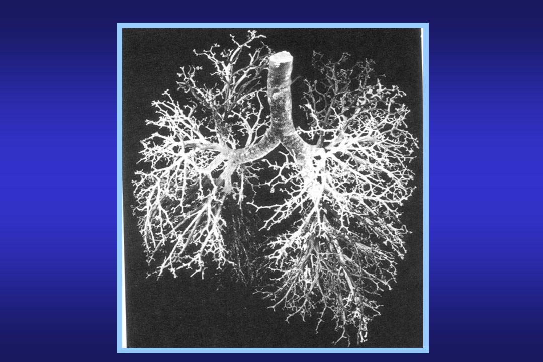 Oedèmes pulmonaires Œdème hydrostatique: OAP cardiogénique – Pcap: passage deau + petites molécules –Dilution des protéines interstitielles: ( cap - int) –Laugmentation du gradient osmotique soppose à la fuite liquidienne initialement –Passage de fluide dans lespace alvéolaire = OAP Œdème de perméabilité: œdème lésionnel –Modification des propriétés intrinsèques de la mb K et –Disparition du gradient osmotique