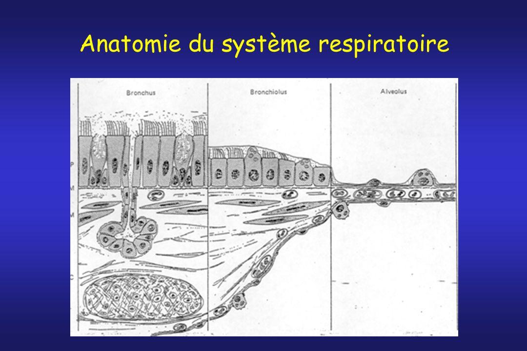 Plan Anatomie du système respiratoire –Comment larchitecture du poumon contribue à sa fonction Ventilation –Comment les gaz arrivent aux alvéoles Diffusion –Comment les gaz traversent la barrière air-sang Perfusion –Comment sorganise la circulation pulmonaire Rapport ventilation-perfusion –Comment une combinaison harmonieuse entre débit gazeux et sanguin détermine les échanges gazeux Transport des gaz vers la périphérie –Comment les gaz sont acheminés vers les tissus périphériques Contrôle de la ventilation –Comment les échanges gazeux sont réglés