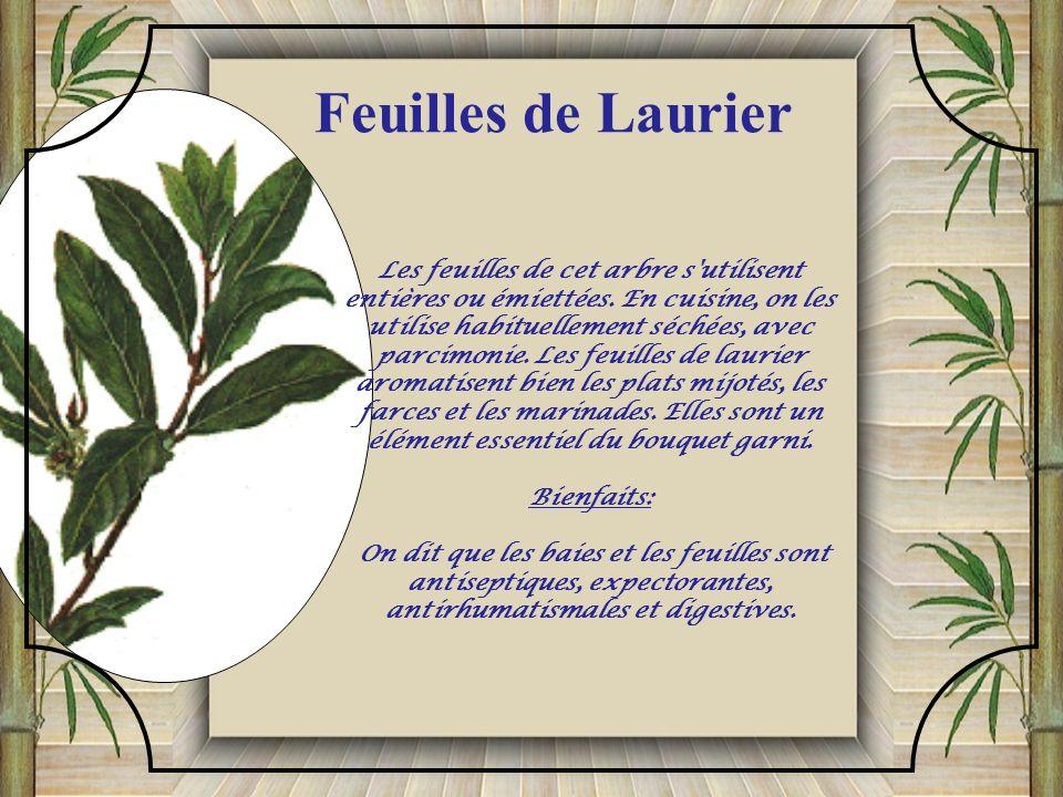. ) Son goût très parfumé, mais très subtil, rappelle celui du citron ou de lanis. Lestragon convient aux aliments à saveur délicate tels que les œufs