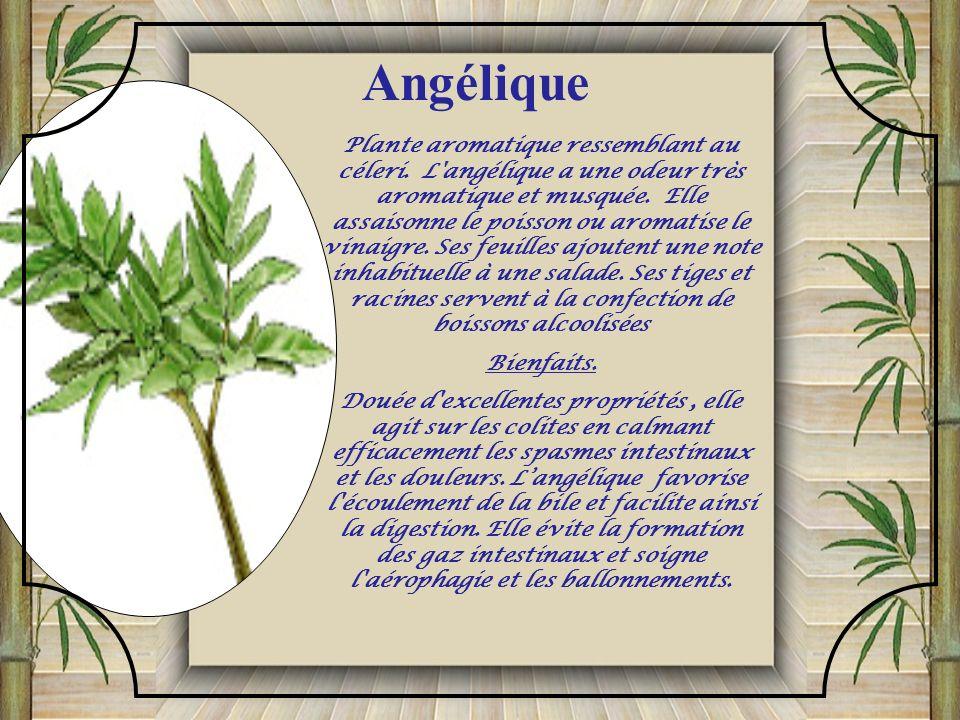 L'aneth est bon compagnon du chou, de la laitue et des oignons, mais nuit aux carottes et tomates. Les feuilles et les graines ont une saveur amère; e