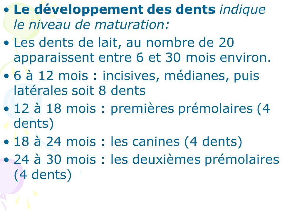 Le développement des dents indique le niveau de maturation: Les dents de lait, au nombre de 20 apparaissent entre 6 et 30 mois environ. 6 à 12 mois :