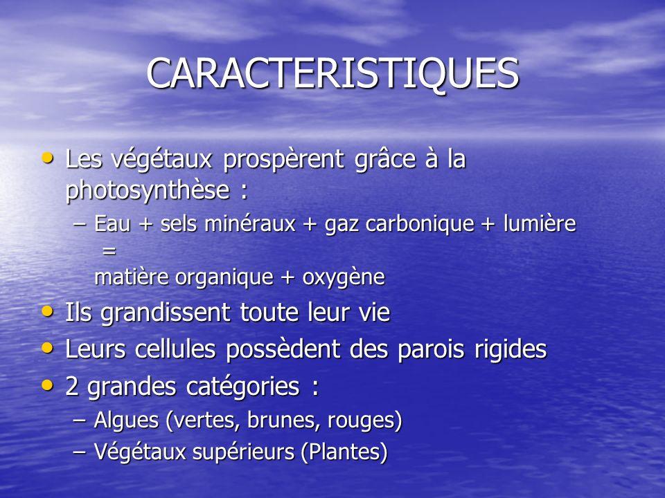 CARACTERISTIQUES Les végétaux prospèrent grâce à la photosynthèse : Les végétaux prospèrent grâce à la photosynthèse : –Eau + sels minéraux + gaz carb