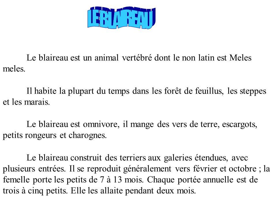 MARTES FOINA La fouine est un mammifère vertébré. La fouine a un corps plus ramassé et des pattes plus courtes que la martre. Sur la gorge et la poitr