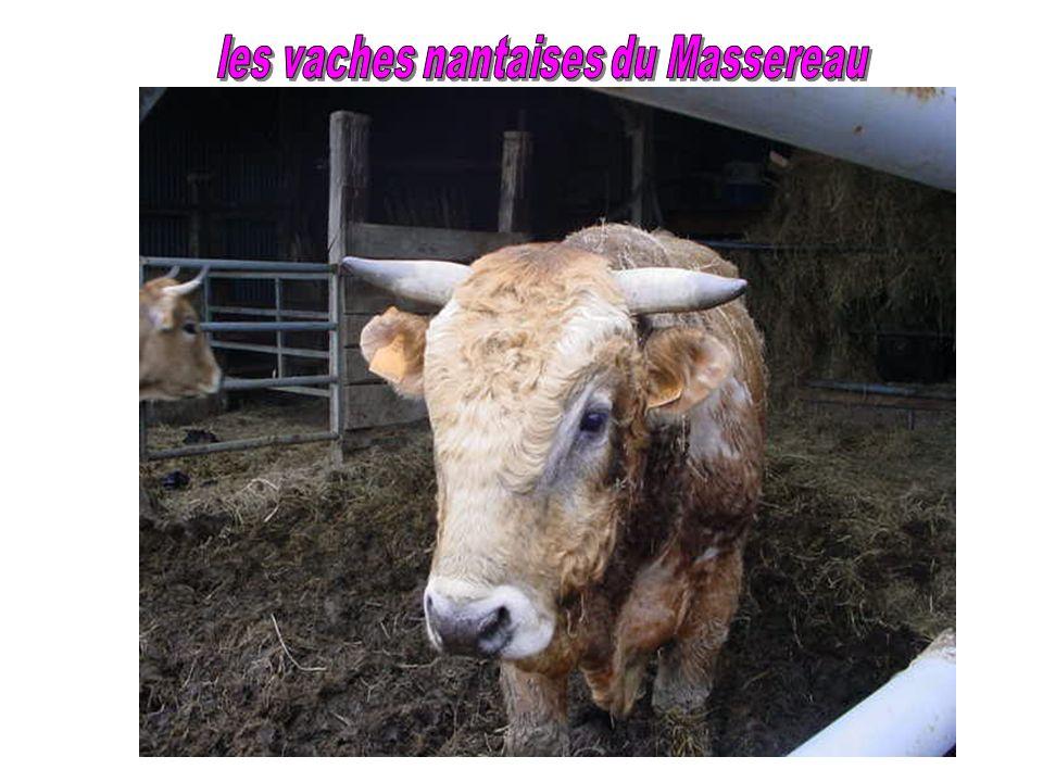 Située sur la rive gauche de lestuaire, sur les communes de Frossay et le Pellerin, cette réserve de 393 hectares englobe lîle du Massereau et une par