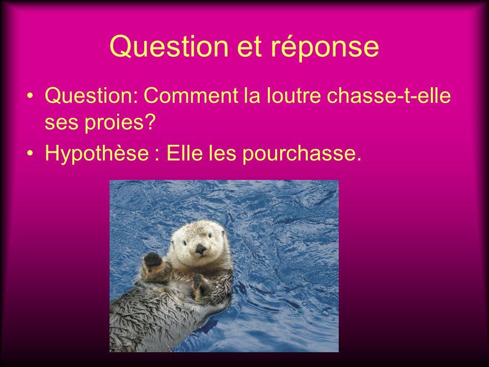 Question et réponse Question: Comment la loutre chasse-t-elle ses proies.