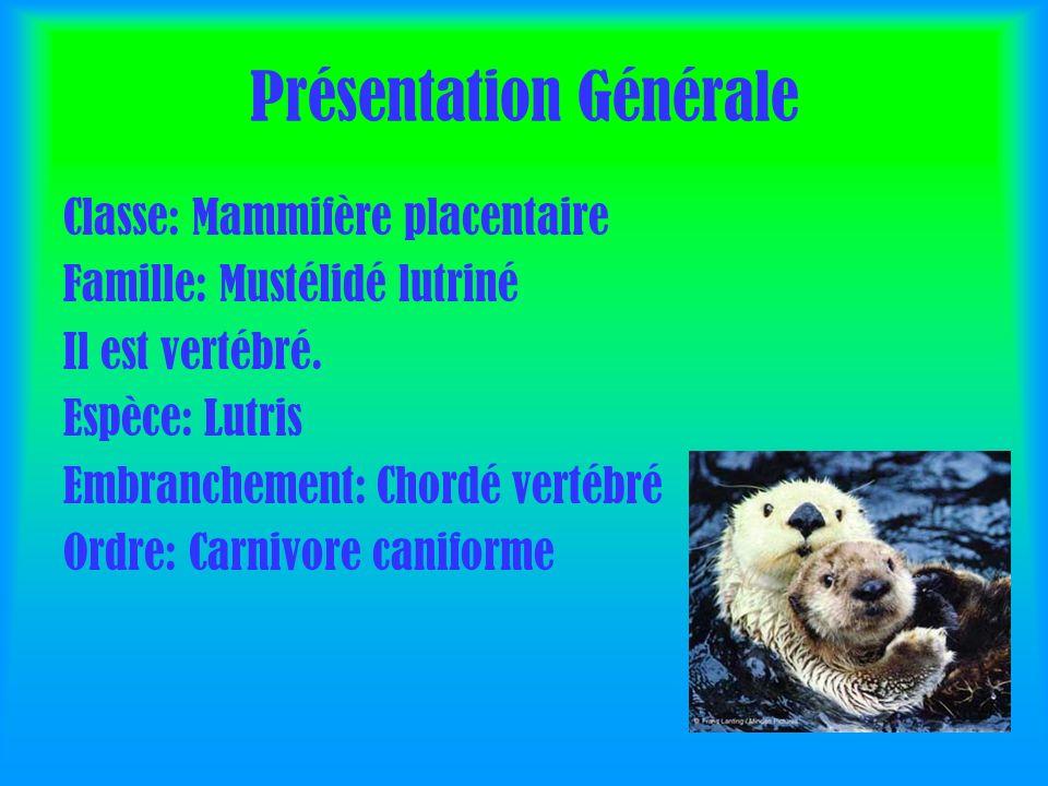 Présentation Générale Classe: Mammifère placentaire Famille: Mustélidé lutriné Il est vertébré.