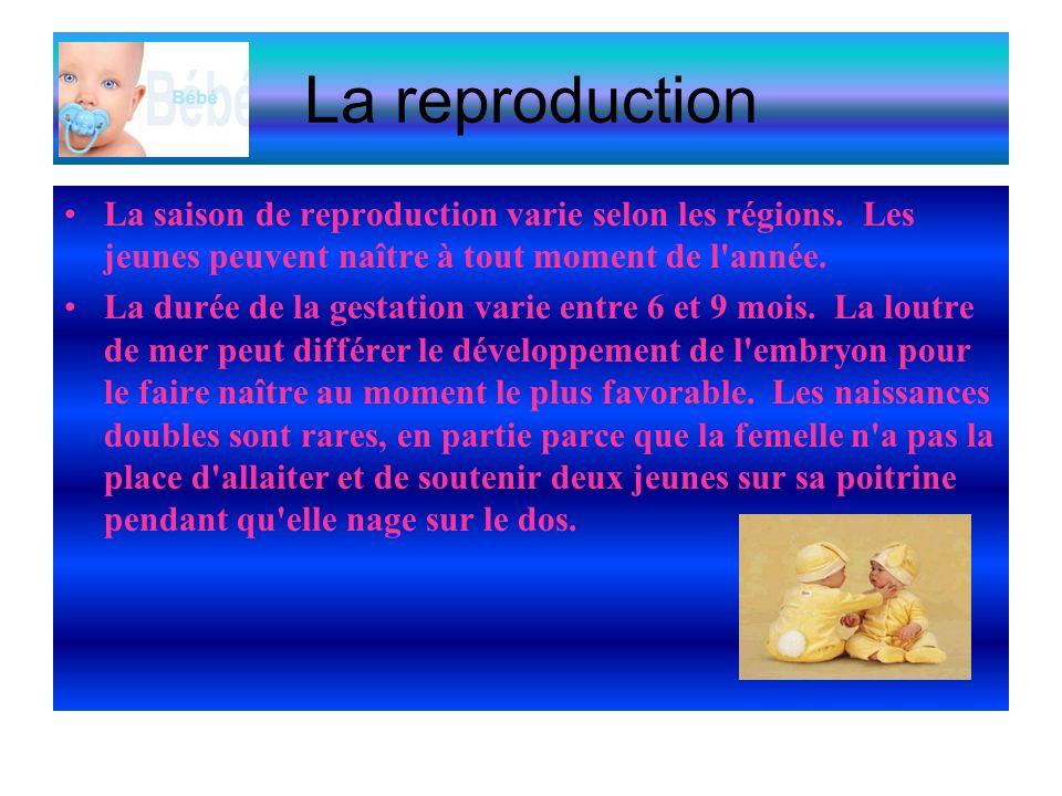 La reproduction La saison de reproduction varie selon les régions.