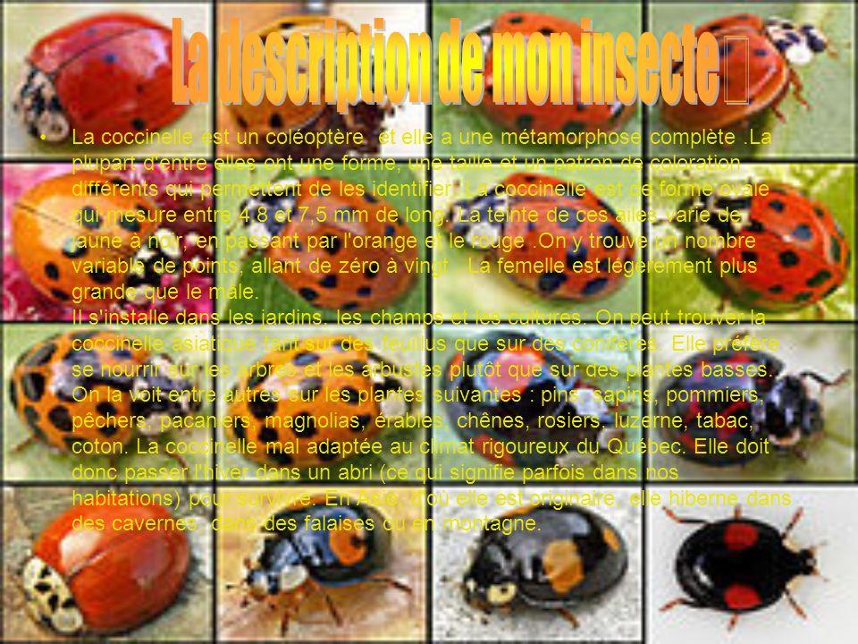 Les habitudes de vie Les œufs de la coccinelle sont souvent pondus à proximité d une colonie de pucerons qui serviront de nourriture aux jeunes ainsi que le pollen et le nectar.