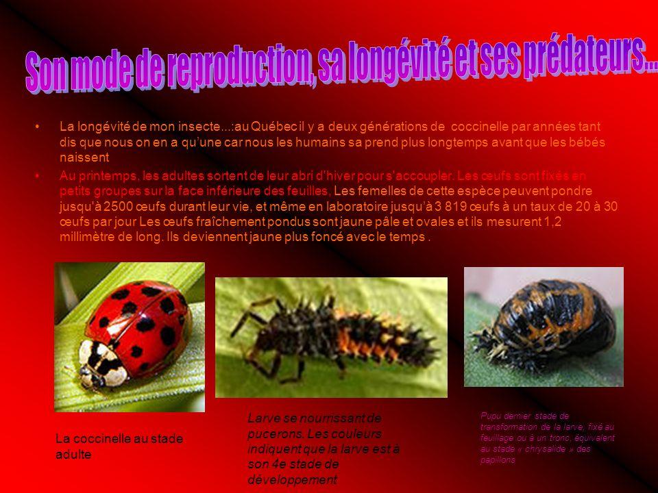 La longévité de mon insecte...:au Québec il y a deux générations de coccinelle par années tant dis que nous on en a quune car nous les humains sa prend plus longtemps avant que les bébés naissent Au printemps, les adultes sortent de leur abri d hiver pour s accoupler.