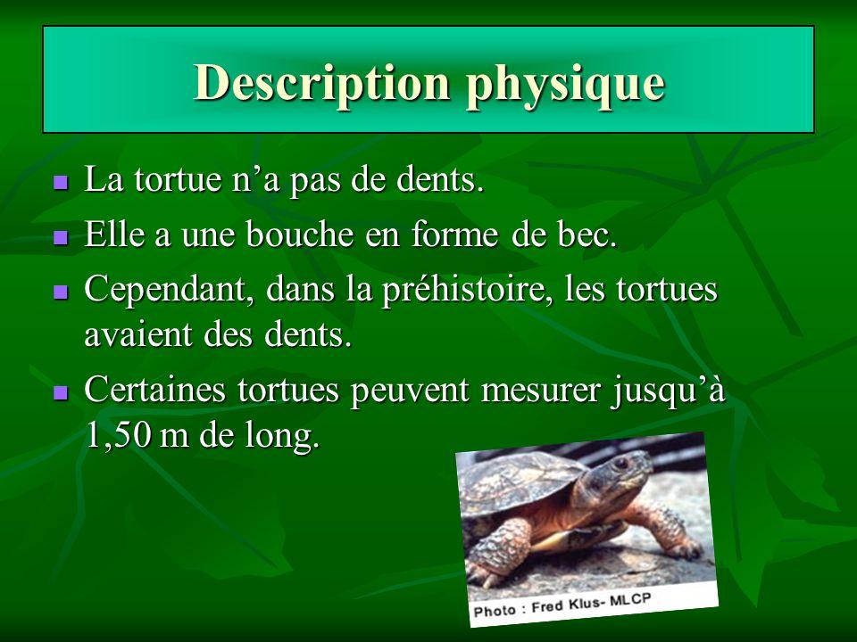 Description physique La tortue na pas de dents. Elle a une bouche en forme de bec. Cependant, dans la préhistoire, les tortues avaient des dents. Cert