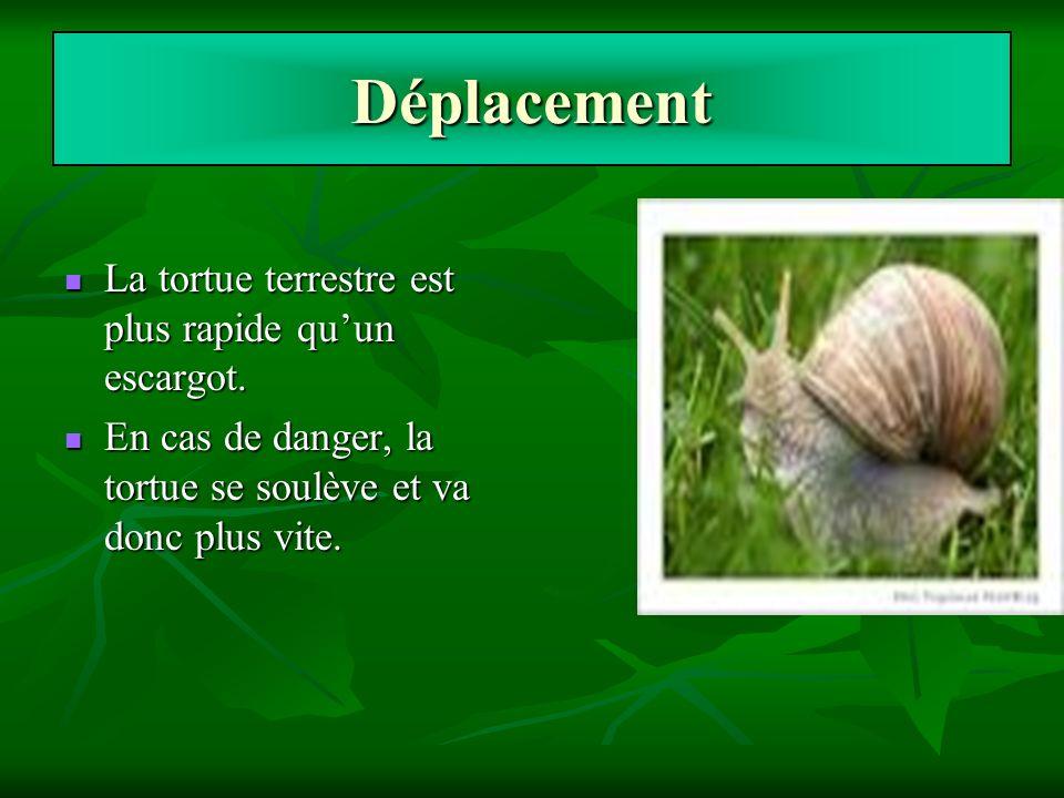 Déplacement La tortue terrestre est plus rapide quun escargot. La tortue terrestre est plus rapide quun escargot. En cas de danger, la tortue se soulè