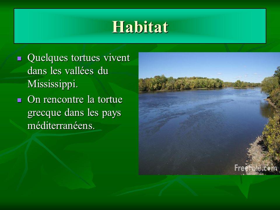 Habitat Quelques tortues vivent dans les vallées du Mississippi. Quelques tortues vivent dans les vallées du Mississippi. On rencontre la tortue grecq