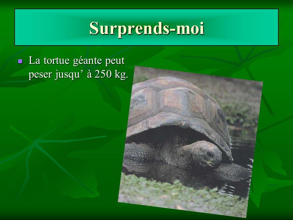 Surprends-moi La tortue géante peut peser jusqu à 250 kg. La tortue géante peut peser jusqu à 250 kg.