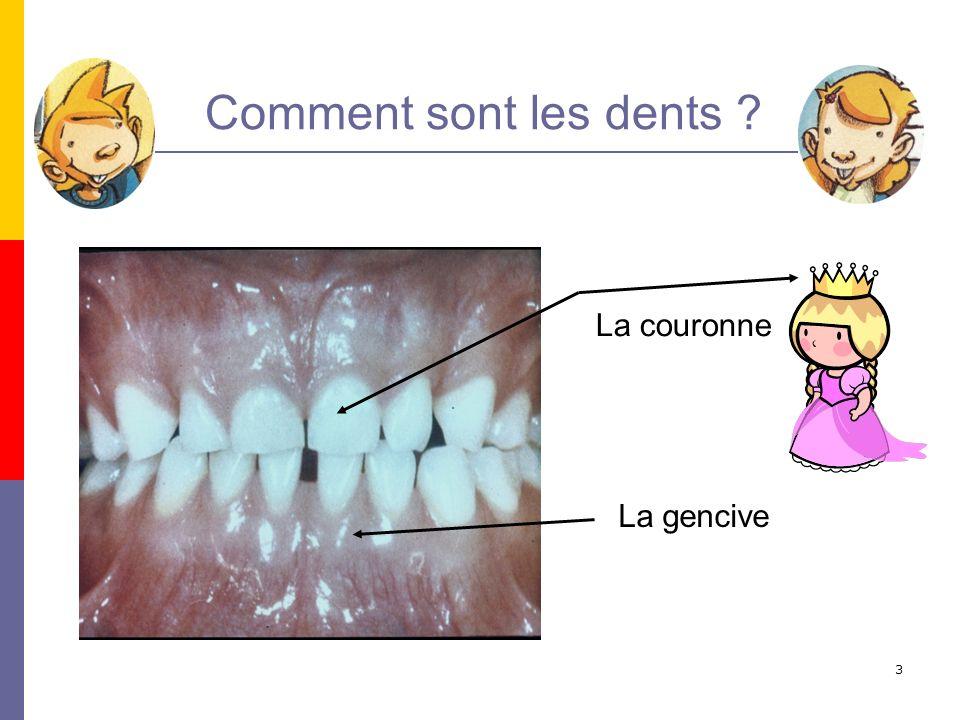 4 La dent est vivante