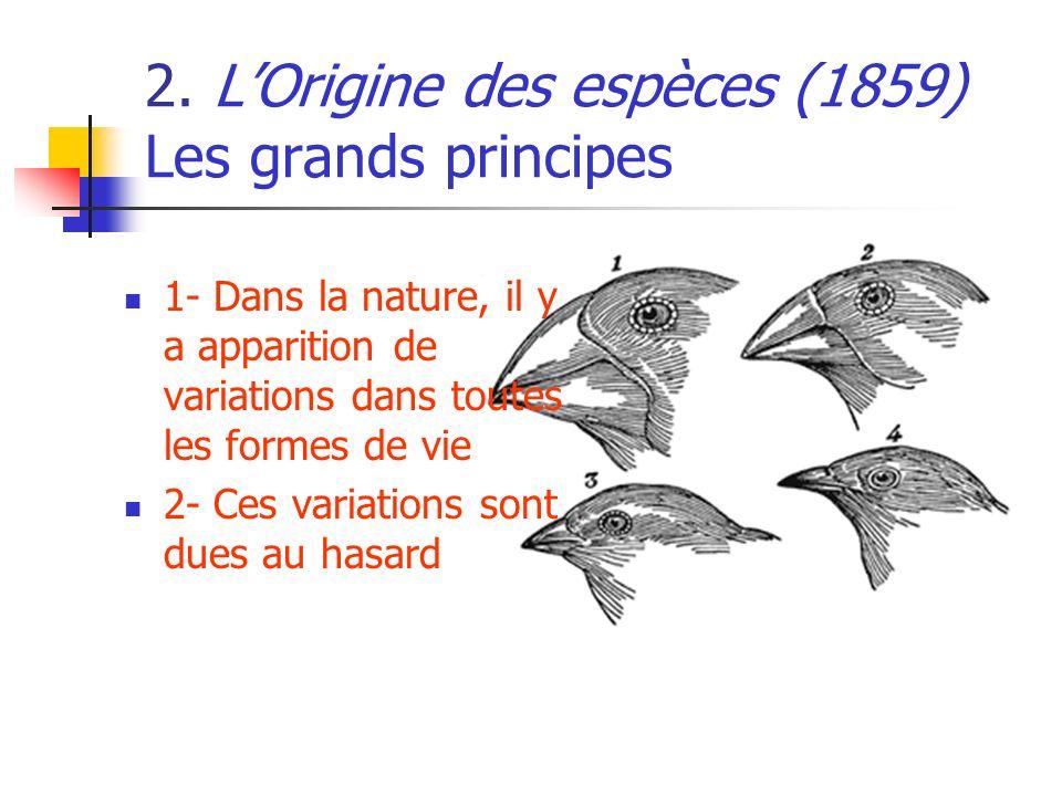 2. LOrigine des espèces (1859) Les grands principes 1- Dans la nature, il y a apparition de variations dans toutes les formes de vie 2- Ces variations