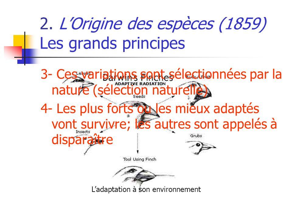 2. LOrigine des espèces (1859) Les grands principes 3- Ces variations sont sélectionnées par la nature (sélection naturelle) 4- Les plus forts ou les