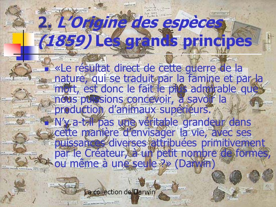 2. LOrigine des espèces (1859) Les grands principes «Le résultat direct de cette guerre de la nature, qui se traduit par la famine et par la mort, est