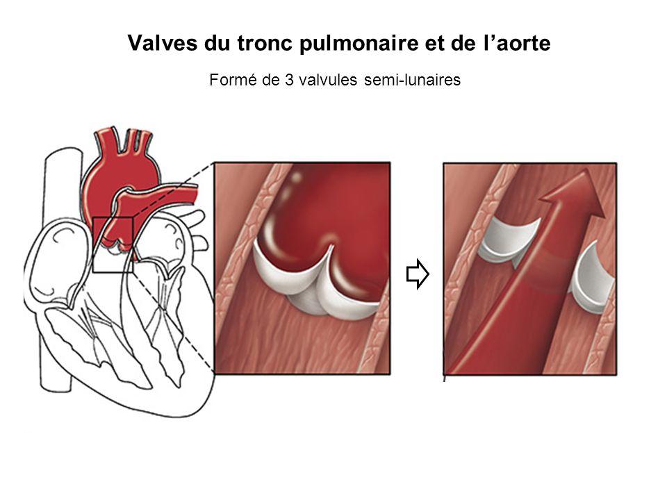 Valves du tronc pulmonaire et de laorte Formé de 3 valvules semi-lunaires