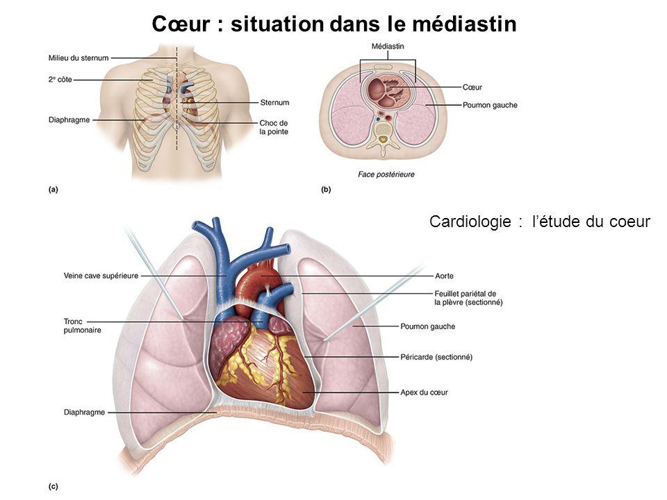 Cœur : situation dans le médiastin Cardiologie : létude du coeur